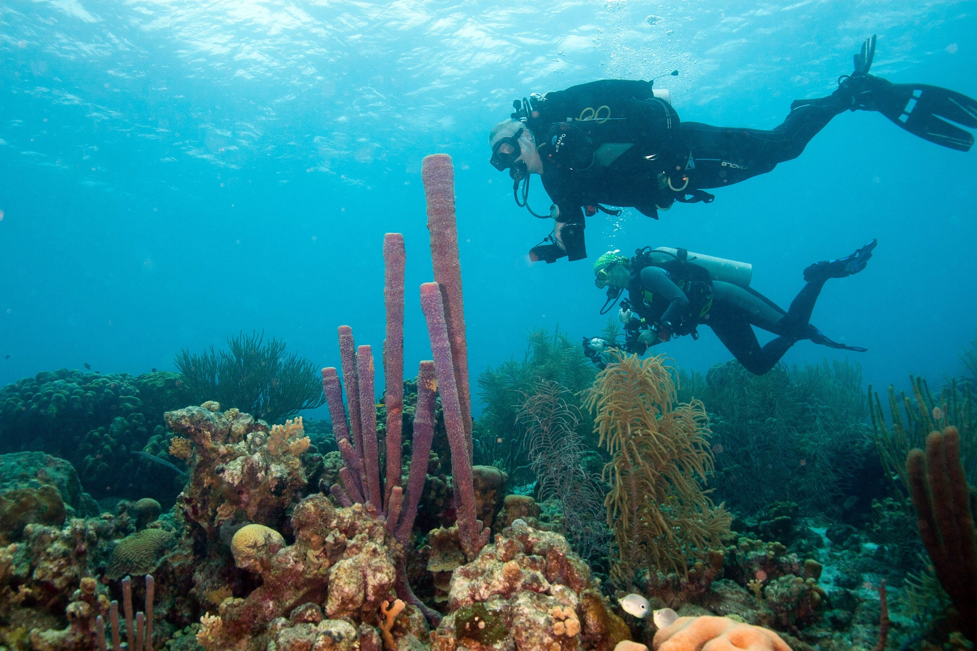 Diving Bonaire Price Diving Bonaire