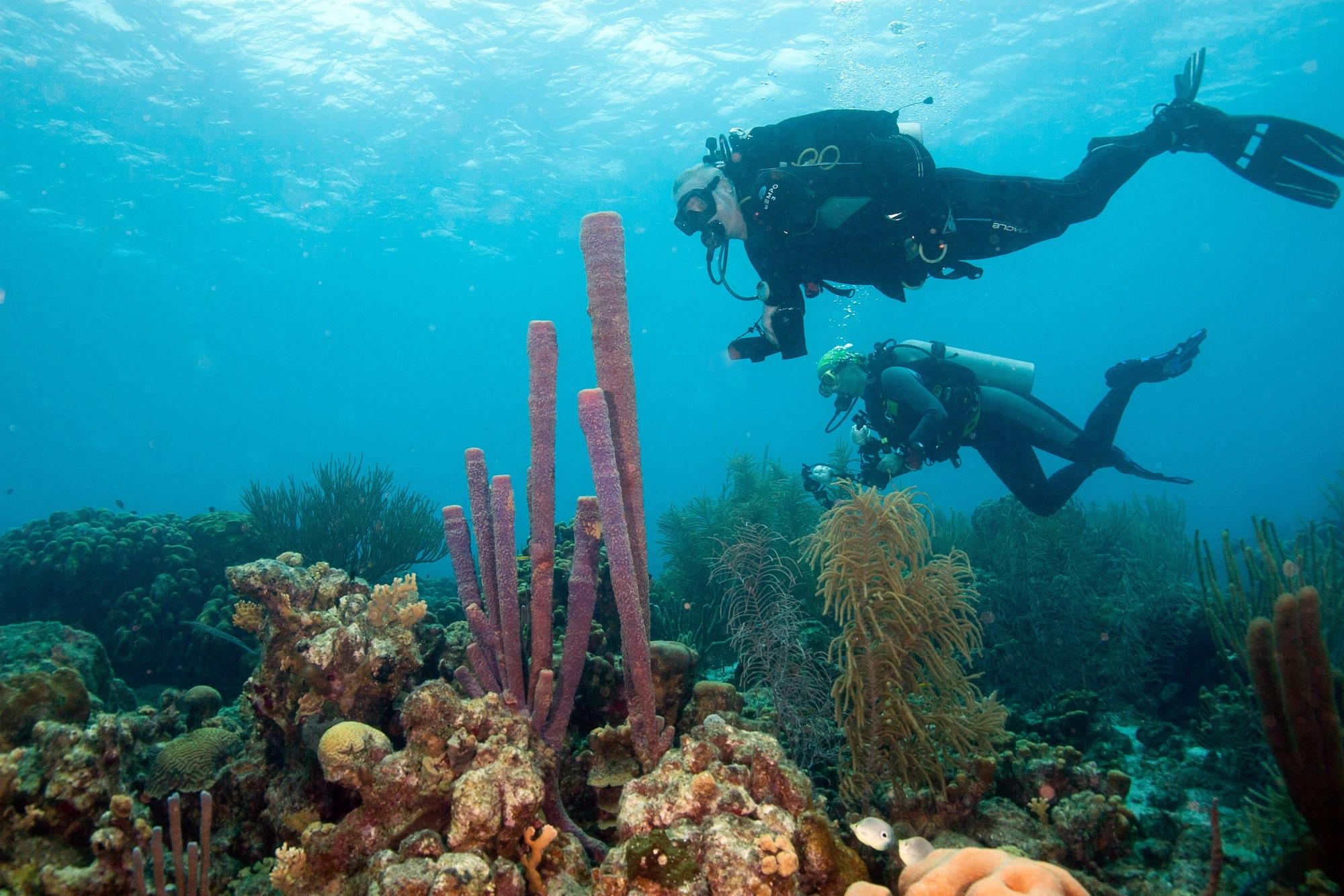Destination Spotlight: Bonaire | MaduroDive Blog