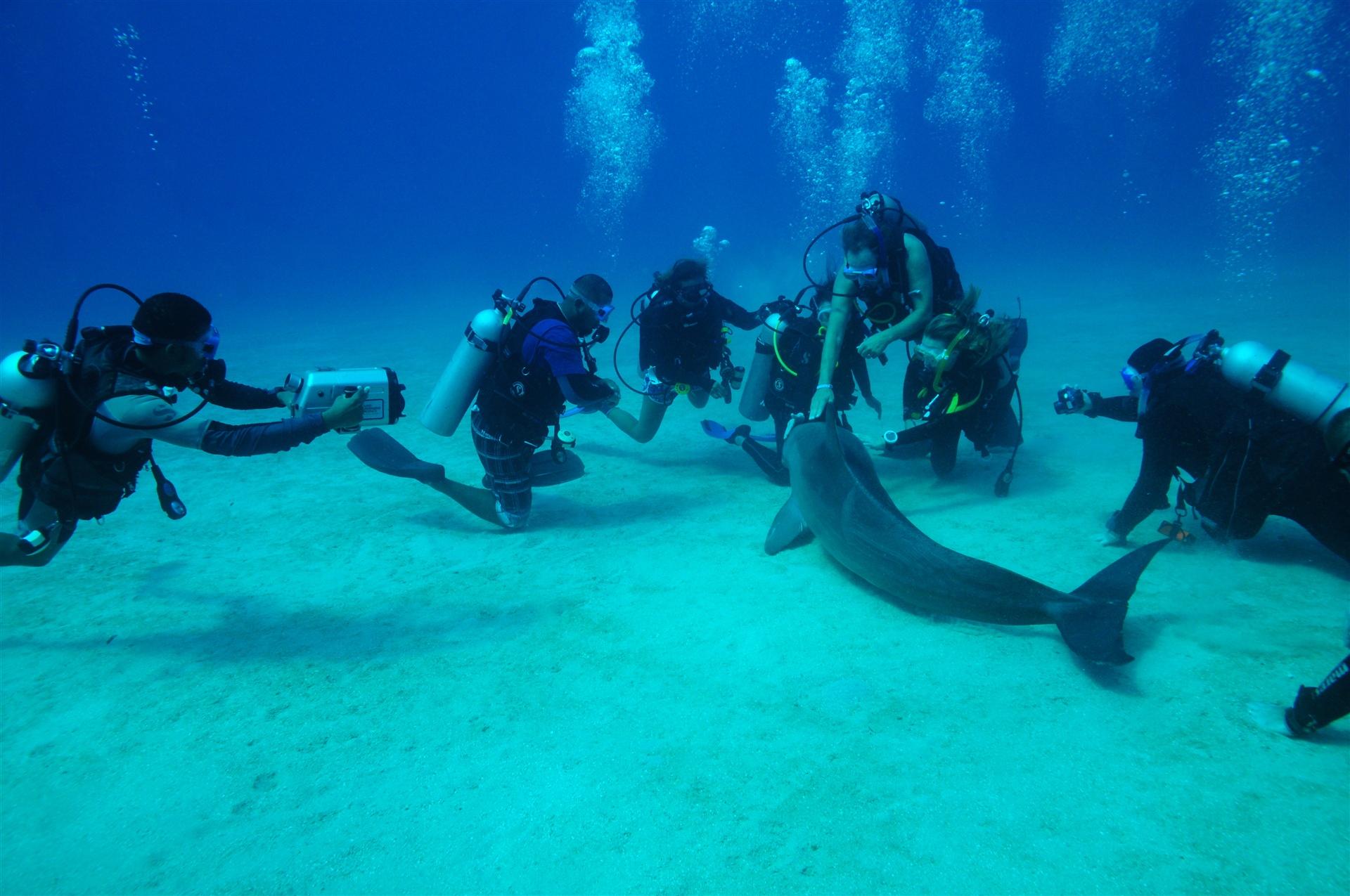Scubaboard Scuba Diving Forum Diving Social Network