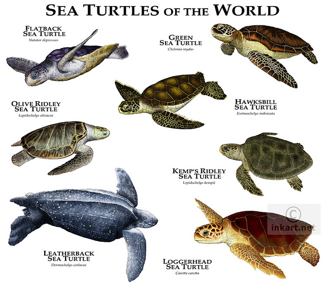 Sea Turtles The Godfathers Of Scuba Dive Magazines on Color By Number Birds