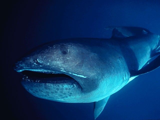 Diving with whale sharks madurodive blog for The fish that ate the whale
