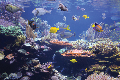 North America Aquarium Diving Madurodive Blog