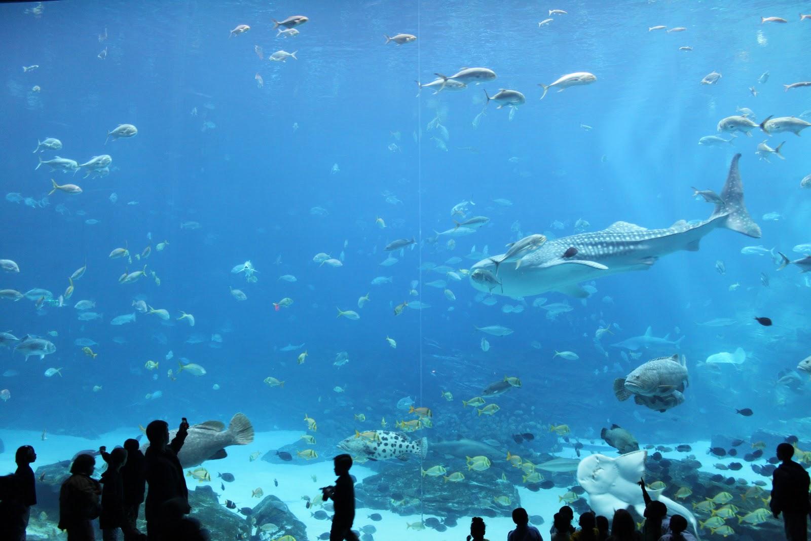 North america aquarium diving madurodive blog for Georgia freshwater fish