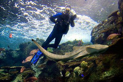 North america aquarium diving madurodive blog for Tropical fish las vegas