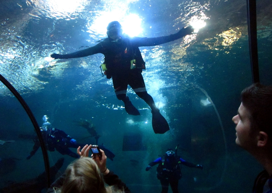 People Come Here Annually To This 23 Acre Pacific Marine Wildlife Attraction Pages Of The Deep Is Considered Best S Dive On Oregon Coast