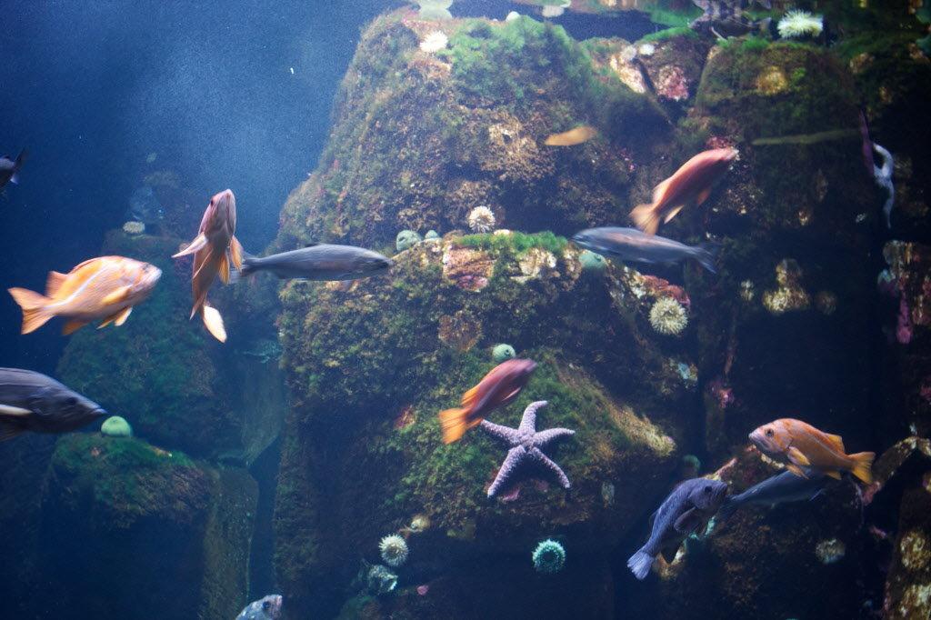 North america aquarium diving madurodive blog for Deep sea fishing oregon coast