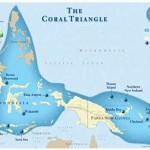 coral-triangle-3