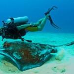 3_Turks_Caicos_Caribbean_Diving_ray_%201_800_499