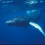 Diving_Liveaboard_in_Turk_and_Caicos_-_Caribbean_18