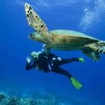 diving-excursions-turks-caicos