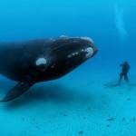 salt-cay-whale