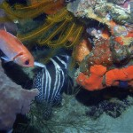champagne-reef-snorkel-dominica-1