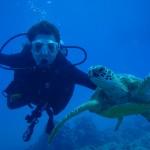 diver_dolphin-dive