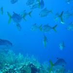 diving-little-cayman-2