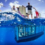 aqua-sub-underwater-great-white-shark-diving