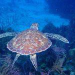 little_cayman_island__7_