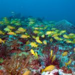 grunts-on-divers-dream2